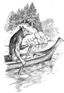 Coyoteinacanoe